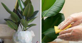 Tại sao ai cũng nên trồng ít nhất một cây cảnh trong nhà?