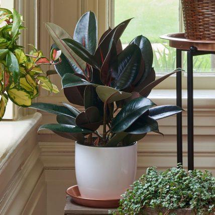 Loại cây cảnh nào phù hợp nhất với từng phòng trong nhà?