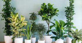 Tác dụng và cách lựa chọn cây cảnh trong nhà theo tuổi?
